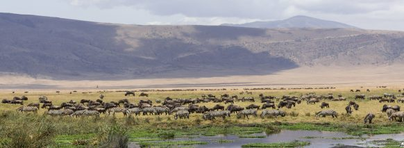Ngorongoro-Crater-tanzania-safaris tours