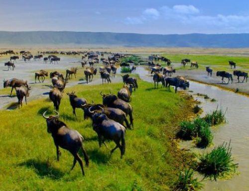 Ngorongoro Conservation Area Tanzania
