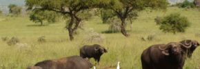 Pian Upe Wildlife Reserve