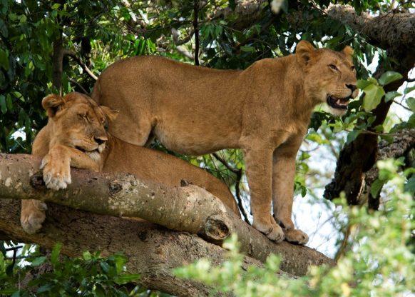 14 Days Uganda Safari Tour