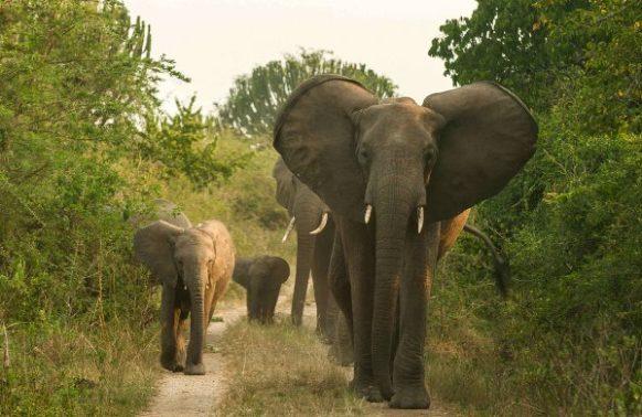 Queen Elizabeth Uganda Wildlife safari tour 3 Days