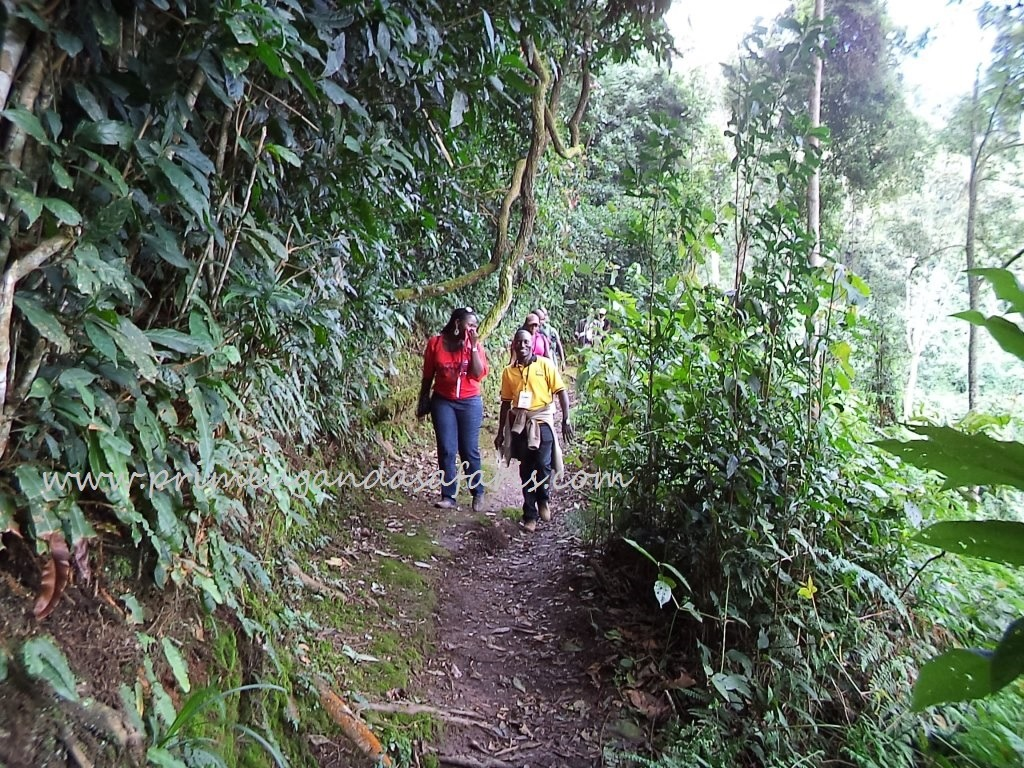 Rwanda safari sites