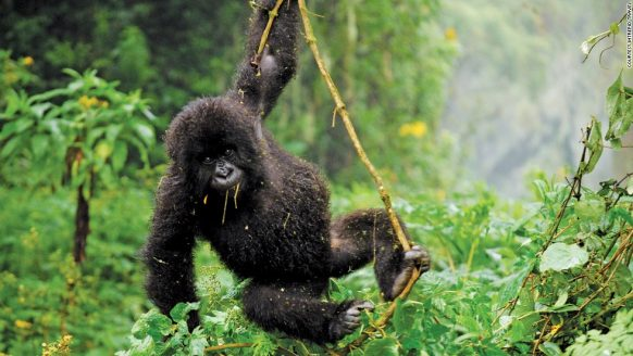 4 Day Gorilla Trekking-Rwanda-4 Days Rwanda Gorilla Safari Tour