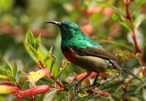 19 Days Uganda Birding Safari