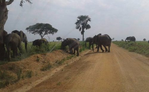 Toro Semliki wildlife reserve game drive