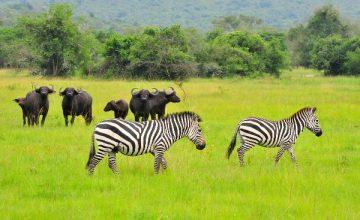 Uganda Camping Tours 14 Days
