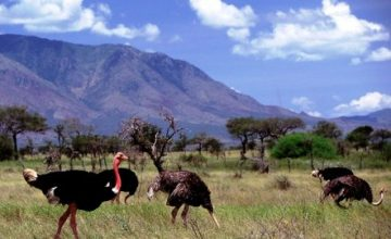 Uganda Safari to Kidepo National Park - 3 Days