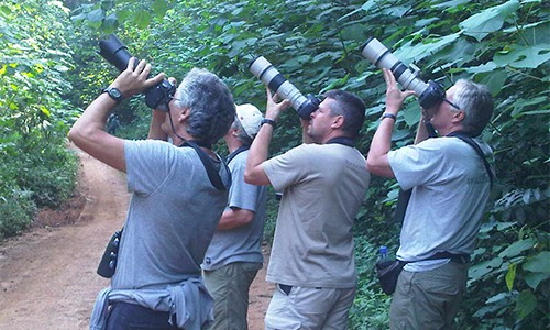 19 Days Uganda birding safari