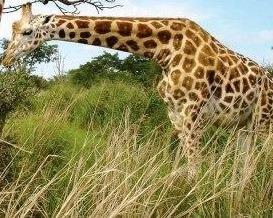 Ugandas-Kidepo-Valley