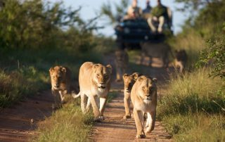 Unlimited game drives in Kruger National Park South Africa Safari Tours