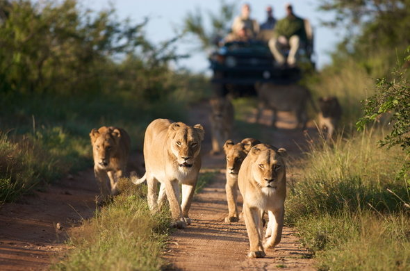 Explore Tanzania's Best Wildlife Safari Destination On Your Africa Safari