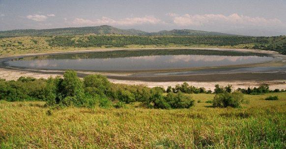 Vegetation in Kigezi wildlife Reserve