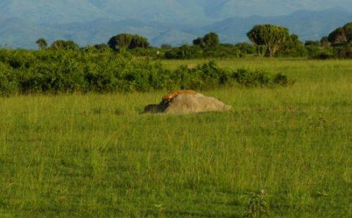 Vegetation in the Kyambura Game Reserve