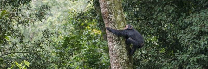 Visit Nyungwe Forest on a trip to Rwanda