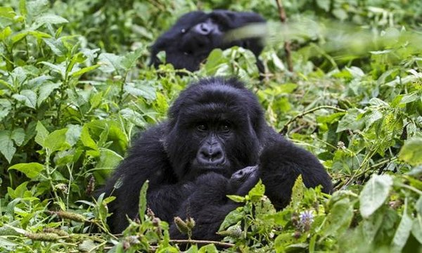 What Makes Each National Park in Uganda unique? – Uganda Safari News