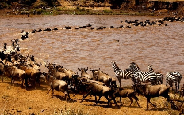 Magical Masaai Mara Game Reserve in South Western Kenya-Kenya safari news