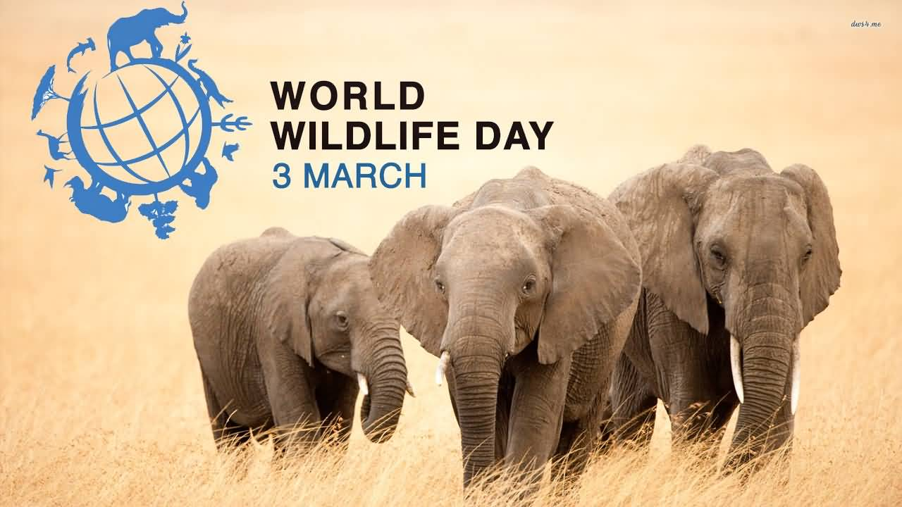 World Wildlife Day 2019 Uganda activities calendar