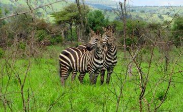 Wildlife Safaris Rwanda
