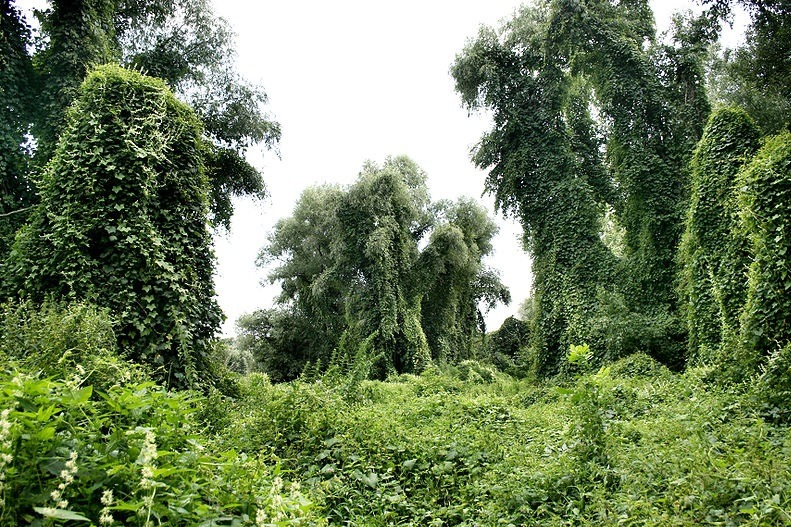 speech on deforestation and afforestation