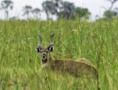 Ajai Wildlife Reserve Uganda