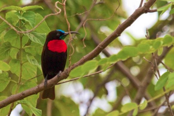 akagera national park birds