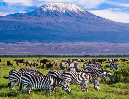 National Parks of Tanzania | Tanzania National Parks | Safari Game Parks