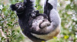 andasibe-mantadia-national madagascar safari tour package