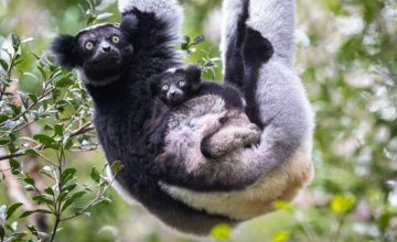 andasibe-mantadia-national madagascar safari tour package