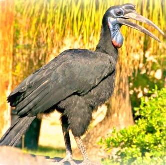bird watching safari in Uganda