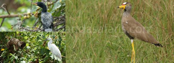 14 Uganda Birding Safari