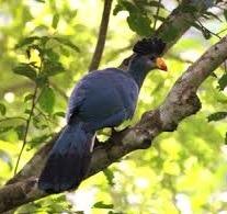 birding safaris in mabira -uganda