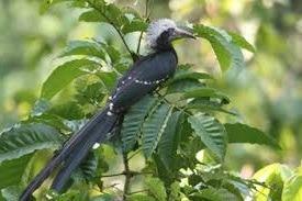 birding safaris - uganda safaris
