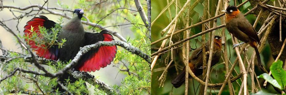 birds-in-nyungwe-national-park-rwanda-tour