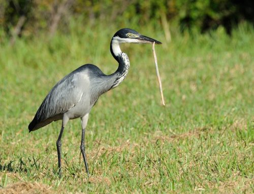 Uganda's Best Birding Safari Destinations For Birding Fanatics