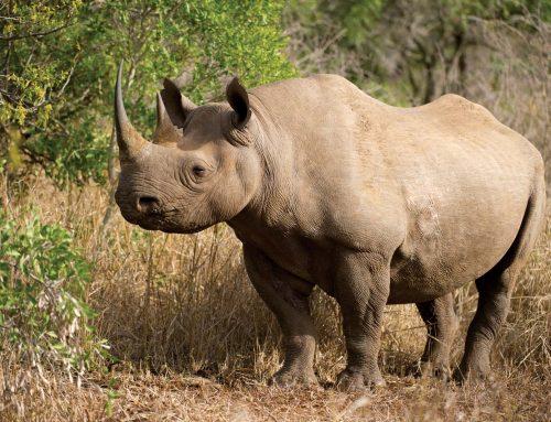 Aberdare National Game Park Kenya