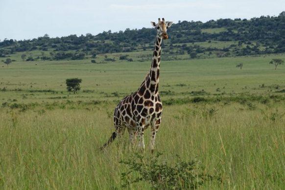 2 Days Murchison Falls Safari – Wildlife Viewing Tour