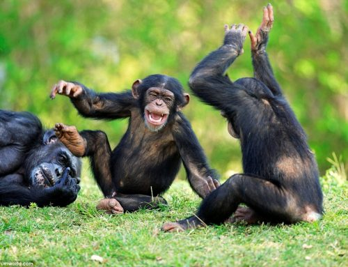 20 Days Scheduled Group Uganda Rwanda Primate, Adventure, Wildlife & Culture Safari