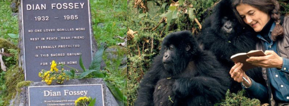 2 Day Gorilla Trek Rwanda-2 Days Gorilla Safari Tour