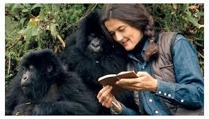 dian fossey -gorilla conservationist