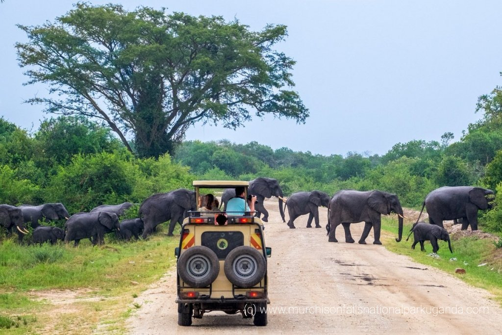 14 Days Gorilla safari Uganda wildlife tour Rwanda