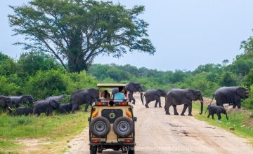 Wildlife Safari in Uganda; 2 Days uganda tour