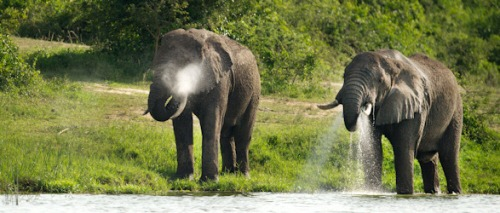 9 Days Uganda Self Drive Safari Uganda Self Drive tour