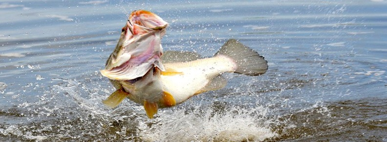 Sport Fishing Uganda Tour Murchison Falls National Park Uganda safari