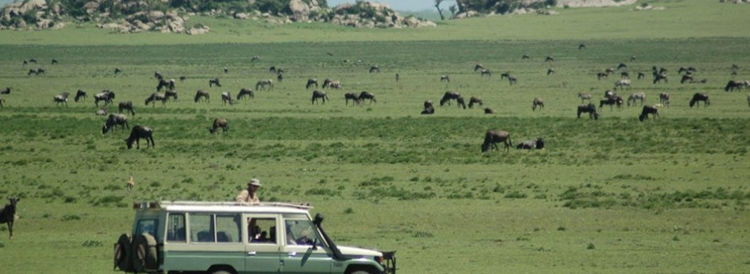 game-drivein-Serengeti National Park
