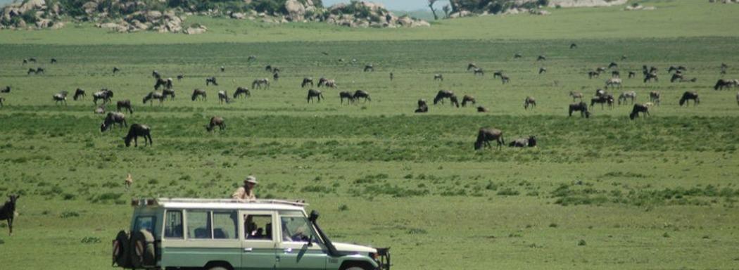 6 Days Tanzania Safari Tour, Wildlife Viewing Safari in Tanzania Serengeti, Ngorongoro, Manyara