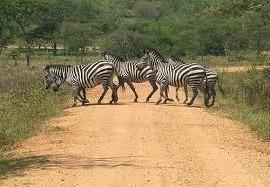 3 Days Murchison Falls Safari Uganda Tour