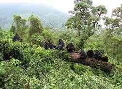 gorilla and tours