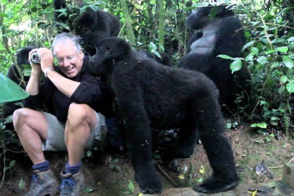 gorilla habituation rwanda gorilla safari