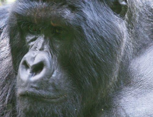 Africa Adventure Safari Vacations in Uganda Rwanda