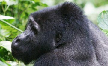 Uganda Safari tour 9 days uganda tour